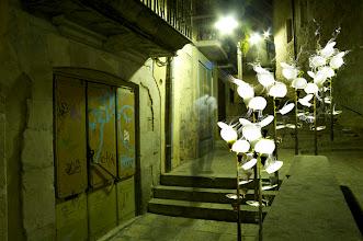 Photo: Rizoma En Sosiego 73 x 110 cm. 2009