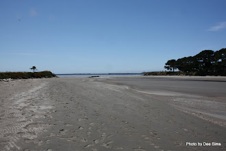 Photo: (Year 2) Day 359 -  Estuary at Crescent City Campsite