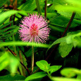 The Sunshine! by Abhishek Majumdar - Nature Up Close Flowers - 2011-2013