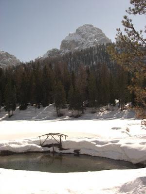 Sotto la neve di asolina
