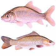 Tips Trik Jitu Memancing Ikan di Sungai