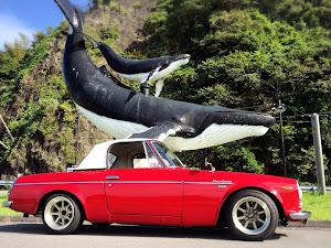 フェアレディー SR311  1969のカスタム事例画像 yurakiraさんの2019年09月15日23:01の投稿