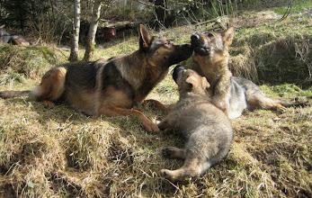 Photo: Evita og Tasha diskuterer baneoppdragelse