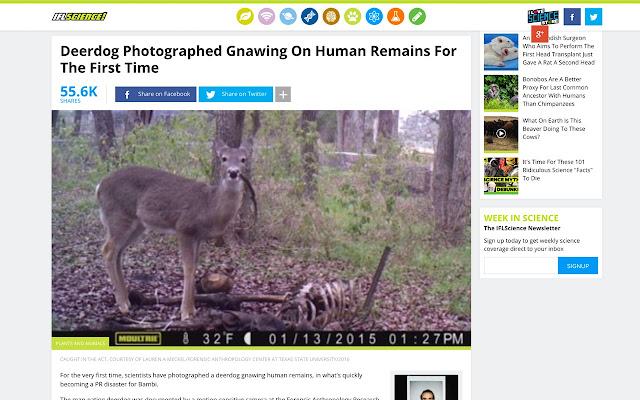 Deer to Deerdog