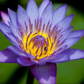 by Sandeep  Kumar - Nature Up Close Flowers - 2011-2013 ( wow, macro, purple, green, pink, flower )