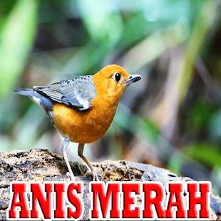 Kicau Terapi Anis Merah Mp3 - náhled