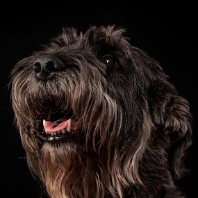 Big Leo. by Susan Pretorius - Animals - Dogs Portraits