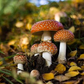 Mushrooms in the city by Jason Rose - Nature Up Close Mushrooms & Fungi ( mushrooms )