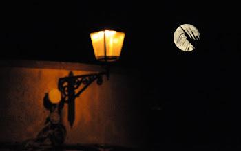 Photo: Mondschein und Palme