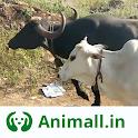 गाय भैंस wala पशुमेला - Animall app icon