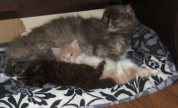 Photo: Neil and Debbies chilled Maine Coons