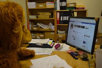 Photo: Orangutan Appeal UK