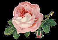 https://4.bp.blogspot.com/-hNmV8nb0VBE/W4gmm5DCgqI/AAAAAAAAF6c/zO2-5wIlJqctAUqVtd7I52REVVnN_BiMwCLcBGAs/s200/roses-1770165_960_720%2B%25284%2529.png