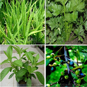 Type Family Medicinal Plants