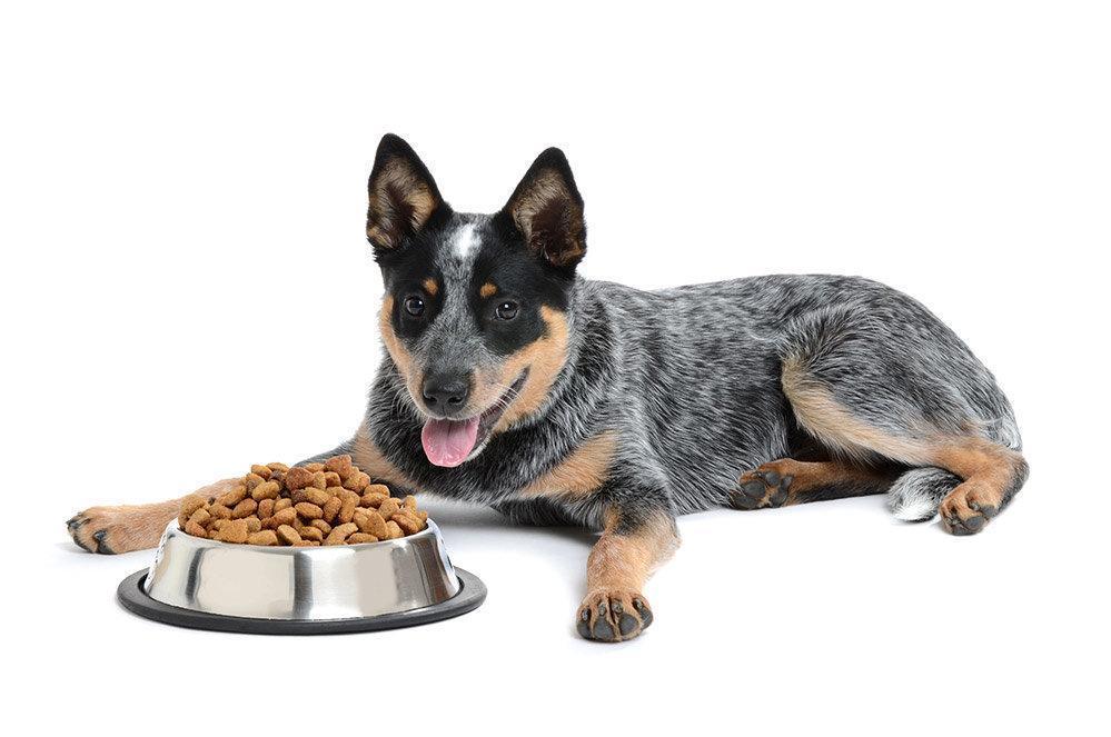 Top 5 Best Dog Foods for Blue Heelers in [2020] - DogStruggles