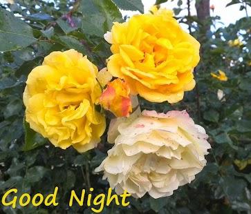 Good Night v5 - náhled