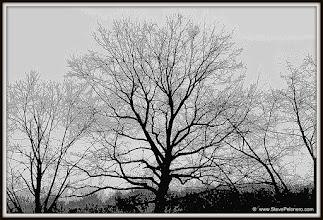 Photo: 331