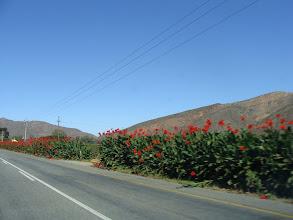 Photo: Blomme langs die pad na Bonnievale.