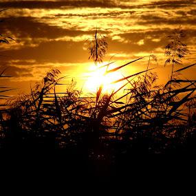 by Oleg Verjovkin - Landscapes Sunsets & Sunrises ( sunset, pwcreflections, latvia )