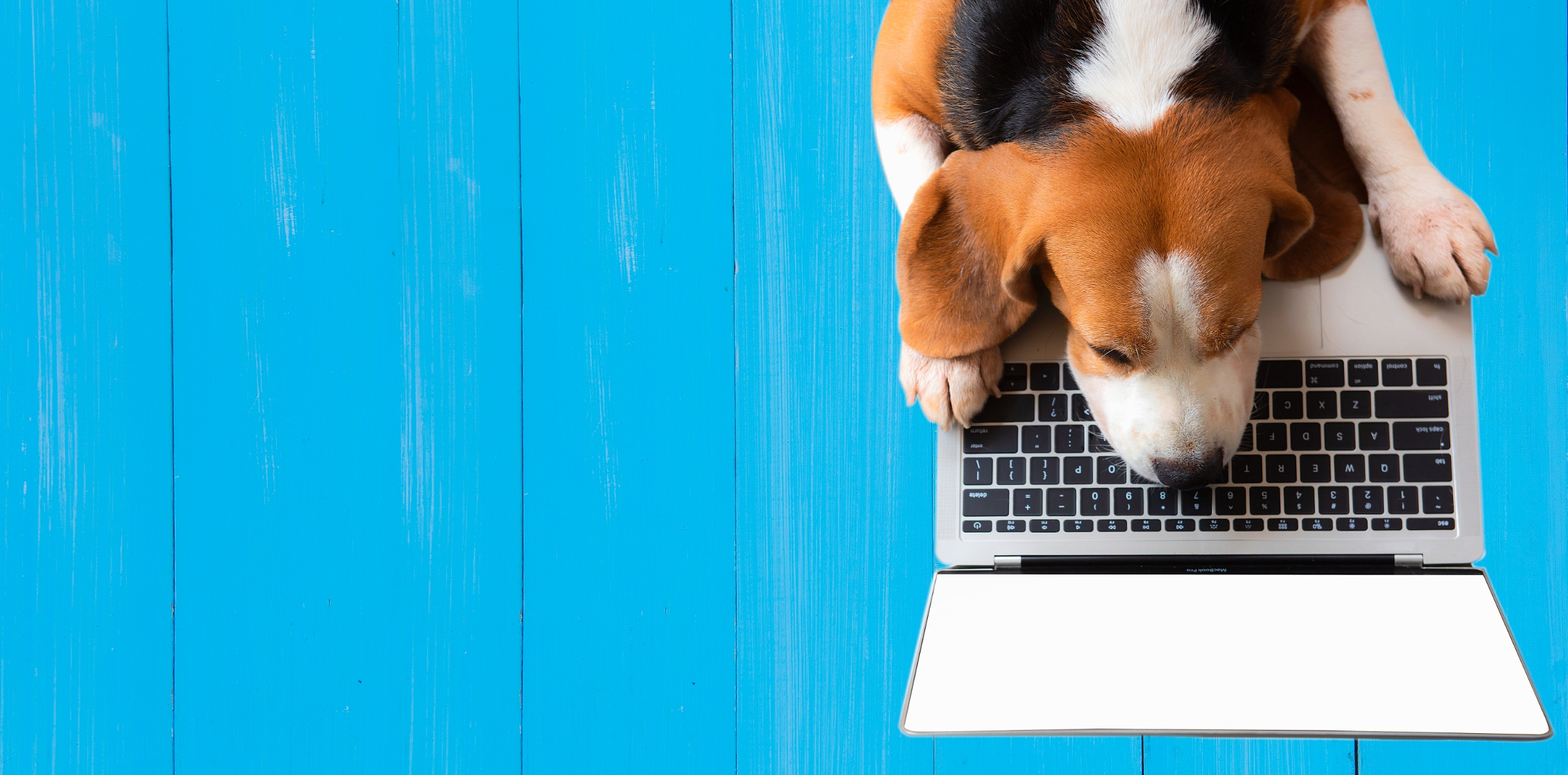 My Own Website Design with Easy Busy Pets