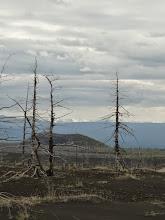 Photo: ну,в общем,там же: мертвый лес