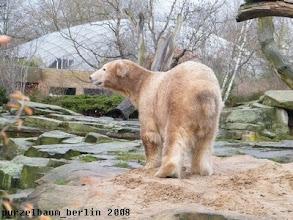 Photo: Nun ist er weg und Knut sondiert die Lage ;-)