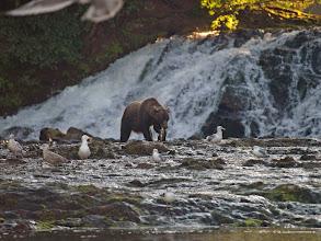Photo: Fishing the Falls