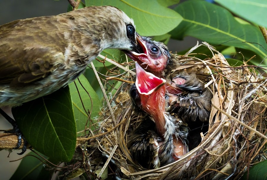 Lovely mother by Mohamad Sa'at Haji Mokim - Nature Up Close Hives & Nests