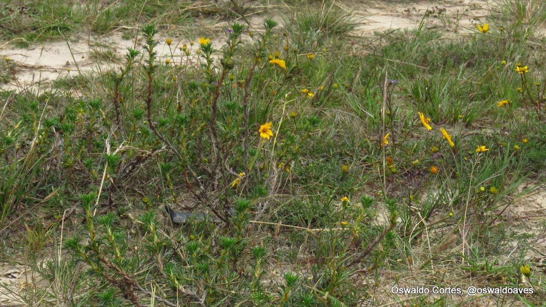 Flora endémica en Cerro Seco