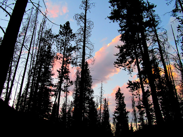 Colorful clouds through the trees