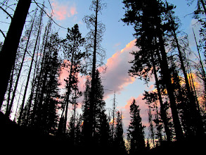 Photo: Colorful clouds through the trees