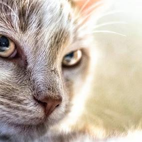 GinGin by Melanie Pond - Animals - Cats Portraits ( cats, cat face, cat, cat eyes, cat portrait, catsofinstagram,  )