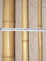 Bamburör