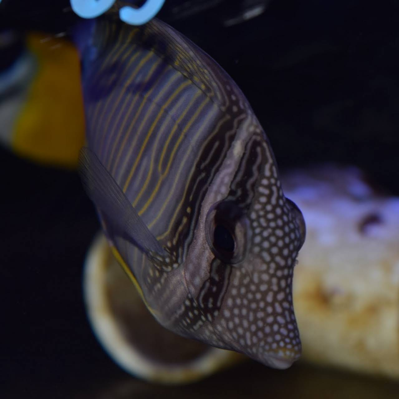Pisces Exotic Pets - Saltwater and Freshwater Aqua Shop