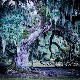 Sad Tree by Anthony Balzarini - Nature Up Close Trees & Bushes ( #cypree #cypreetree #treephotography #photography #naturephotography,  )