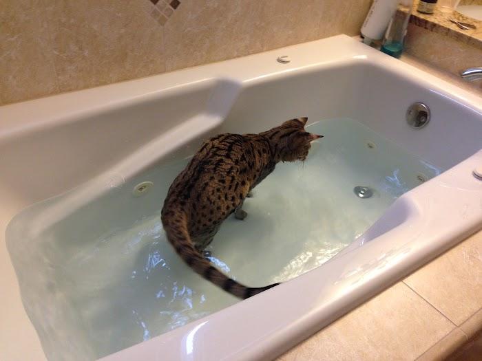 Sunny in the bathtub