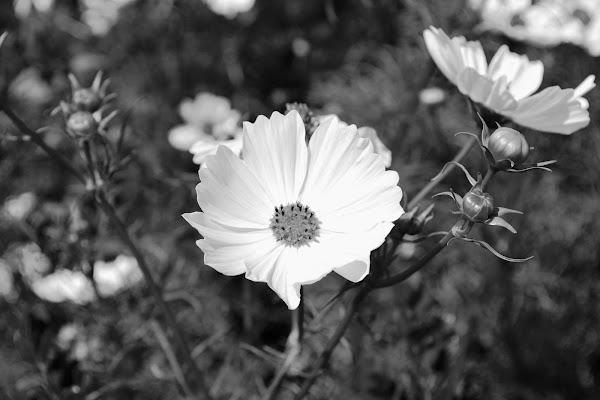 Prato fiorito di Samyna