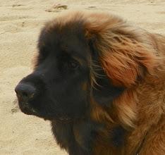 Photo: Mes premier pas à la plage