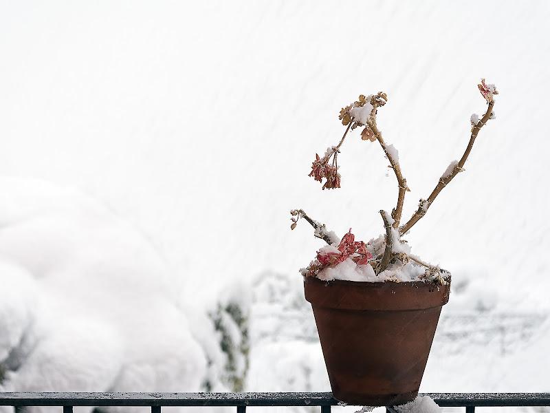 Fiori d'inverno di renzodid