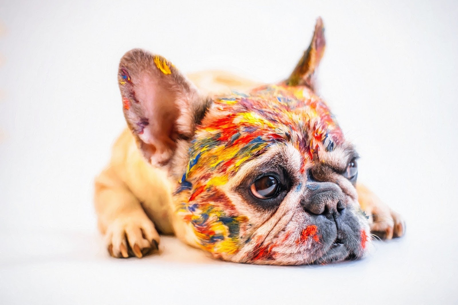 little dog covered in many colors of paint