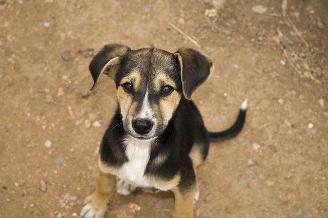 puppy-2862447_640.jpg