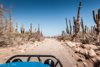 "Photo: Baja Desert Racers Rural Mexico, Baja California Peninsula  So I've tried my hand at a very different kind of ""wildlife"". Recently I've had the great opportunity to ride and drive some of the much famed baja racers. Cactus wipping past my head, crazy desert vehicles bouncing on the ""woop-de-doos"" and adrenalin pumping through my veins, it was an incredible experience to see what these races were all about, and to learn how to drive a stick, hahaha.  Photographic details: I really wanted to get a photo that expressed the speed of these machines, this quickly led me to use a slow shutter speed. It's in cases like these that motion blur is actually desired, I wanted the cactus blurry enough to create a sense of motion, while sharp enough to still be recognizable. I entered shutter priority mode and used an incredibly slow 1/50th of a second exposure, letting the camera choose the rest. Not much time to fiddle with settings so shutter priority mode allows me to choose just one variable without me having to think of the rest! Photography buffs can see my camera chose a good aperture to achieve this in the bright desert sun.  Camera settings: 1/50s f/22.0 ISO160 35mm  I ended up popping a tire and breaking the axle and other parts I didn't even know existed, does that count as a non 4 wheeled vehicle for #transporttuesday given how determined I was not to keep them? Curated by: +TransportTuesday +Mike Masin +Gene Bowker +Steve Boyko +Michael Earley +Joe Paul"