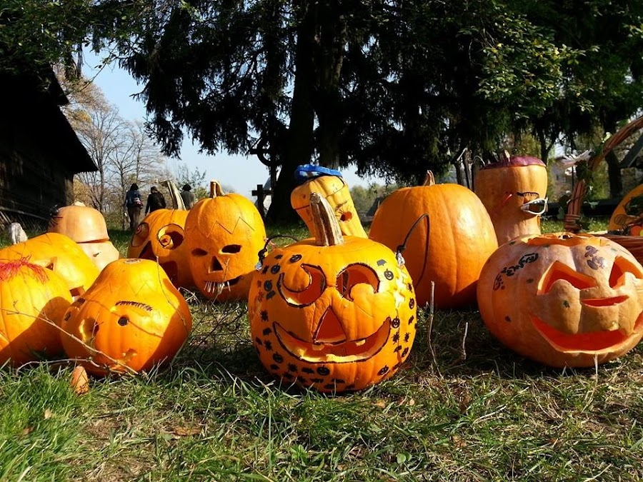 Happy pumpkins :) by Daniela Murat - Public Holidays Halloween (  )