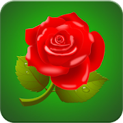 rose wallpaper hd apps on google play