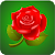 Rose Wallpaper HD file APK for Gaming PC/PS3/PS4 Smart TV