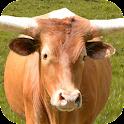 Bull: Angry Attack Simulator icon
