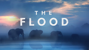 The Flood thumbnail