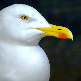 by Stephen McKibbin - Animals Birds