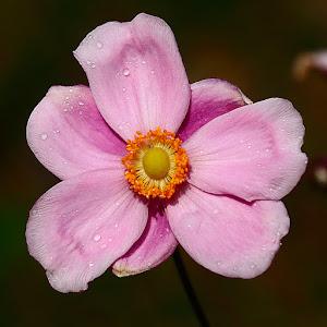 Palette rose.jpg