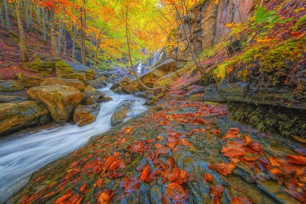 E cadono le foglie... di Alan_Gallo